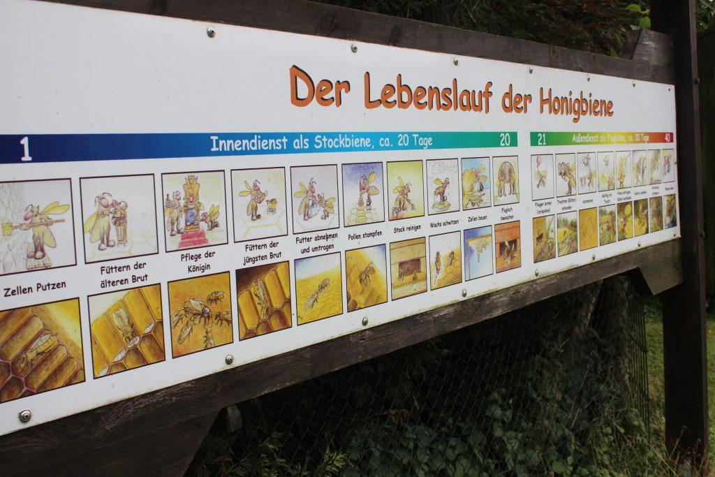 Hier dürfen die Kinder auch selbst mal ausprobieren. Mit der Imkerpfeife werden die Bienen beruhigt.