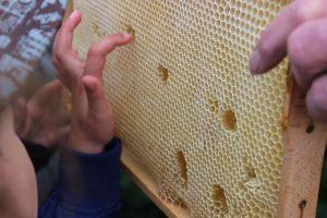 Mmmh...direkt den süßen Honig aus den Waben naschen.